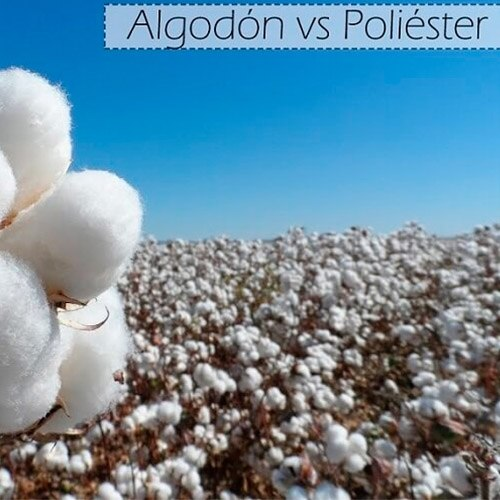 Foto de la noticia Diferencia entre el algodón y el poliéster en las prendas de ropa :: Grupo Anjo, Uniformes de Moda, Diseños exclusivos indumentaria laboral